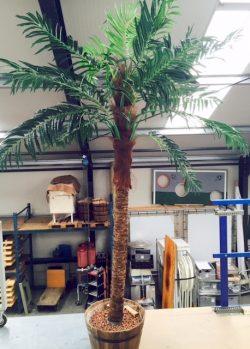 Palmboom huren Ter Aar - Nieuwkoop